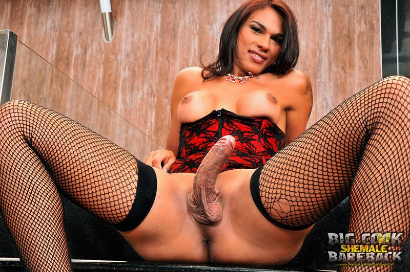 Mylla Pereira Bareback Shemale